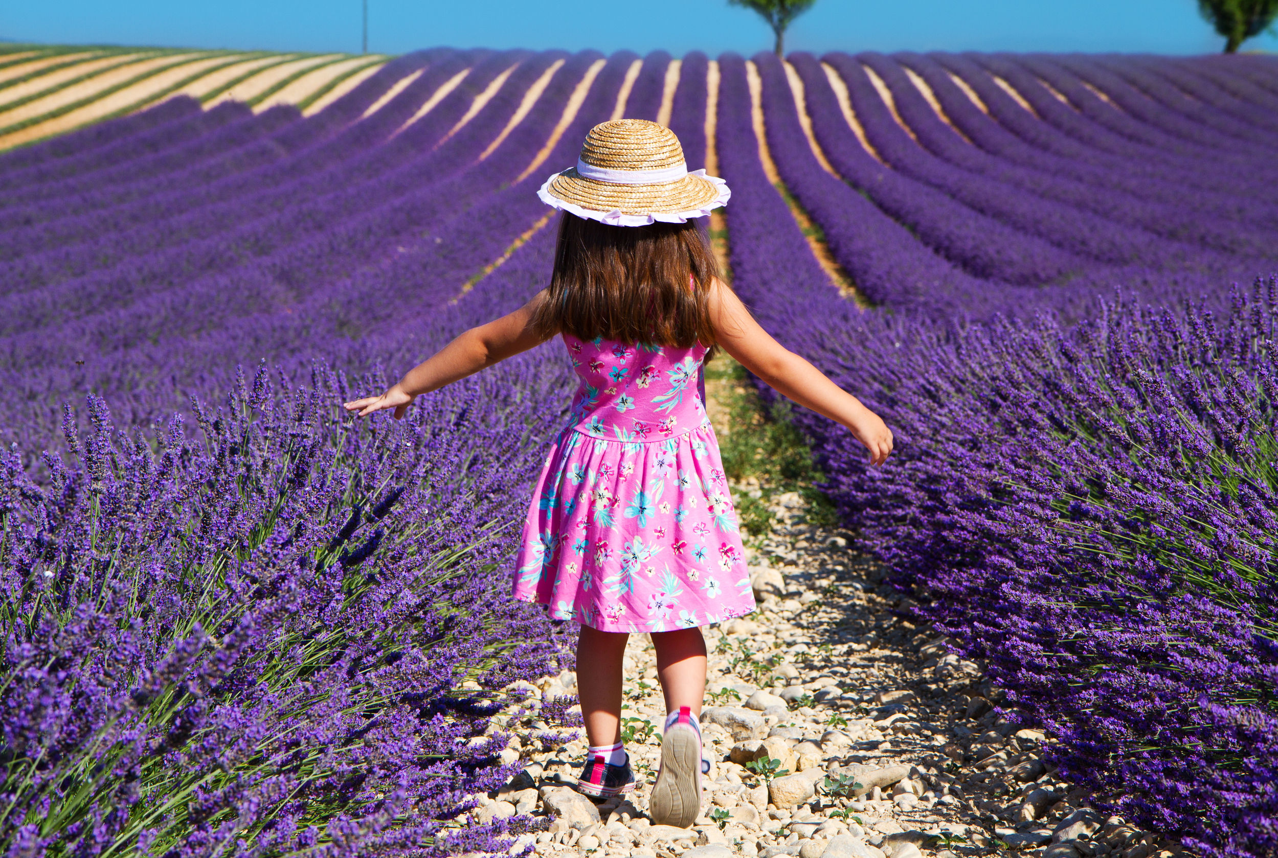 Lavender in the Village